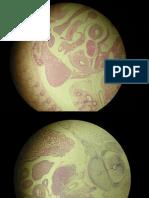 final embriologia ucsur
