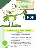 Frog Nervous System 2019