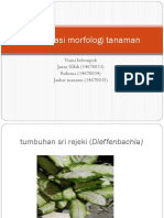 Identifikasi morfologi tanaman.pptx