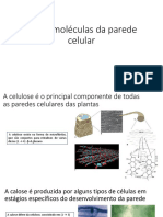 Macromoléculas da parede celular.pptx
