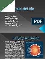 Anatomía-del-ojo.pptx