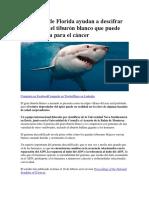 Científicos de Florida Ayudan a Descifrar El Genoma Del Tiburón Blanco Que Puede Tener La Cura Para El Cáncer