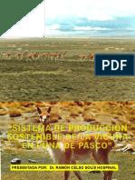 presentacion vicuñas
