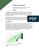 Anatomia Del Plexo Braquial