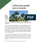 arbol para reforestacion