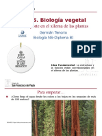 Gtp t5.Biología Vegetal 1ªparte Transporte en El Xilema de Las Plantas 2016-18