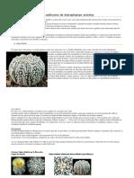 Los Cultivares de Astrophytum Asterias