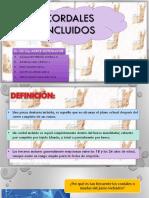 CORDALES INCLUIDOS-1