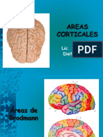 3.2 Areas Corticales (OK)