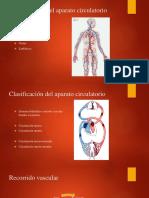 Histología del Sistema circulatorio