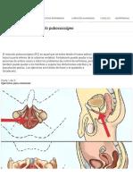 Cómo Ejercitar El Músculo Pubococcígeo_ 11 Pasos