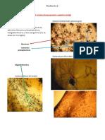 Practicos Microscopio PDF
