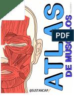 Atlas músculos