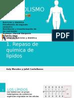 Metabolismo de Lipidos Final