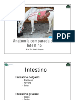 teo intestino comparada2019.pdf
