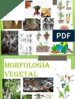 Diapositivas Morfologia de Raiz y Tallo