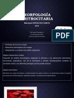 Imagenes Webquest Hematologia