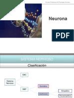16 Neurona y Neurotransmisores (1)-Convertido