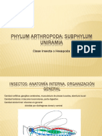 Insectos 2 -Anatomia Interna
