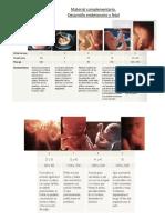 Material Complementario Desarrollo Embrionario