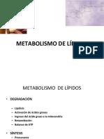 Ppt Metabolismo de Lipidos
