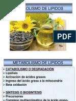 Biosintesis de Lipidos