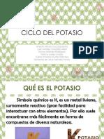 Ciclo Del Potasio