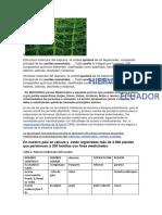 HIERVAS MEDICINALES EN ECUADOR.docx