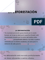 La Deforestación 9 Point