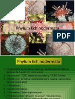 Equinodermata