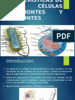 Equipo 3_Caracteristicas Celulas Procariontas y Eucariontas
