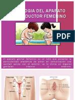 Fisiologia Del Aparato Reproductor Femenino