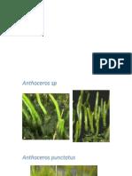 plantae 8