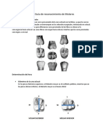Citacion 21 Guia de reconocimiento de Molares.pdf