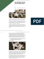 Lobos e cães