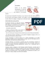 Como Se Forma La Placenta