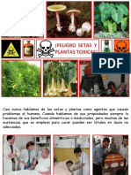 setasyplantastoxicas-160713170218