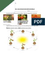 Guia de Estudio Ciclo de Vida de Las Plantas Con Semillas