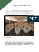 Paraguay Bien Posicionado en Rubroavicola