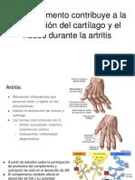 El Complemento Contribuye a La Destrucción Del Cartílago y El Hueso Durante La Artritis
