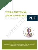 TEORÍA URINARIO.pdf