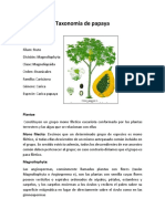 taxonomía de papaya