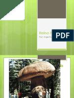 Reino Fungi ppt