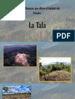 Alteracion Del Habitat Del Bosuqe