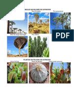 Flora y Fauna en peligro de extinción