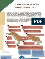anatomia en animales