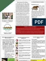 Felinos 20150609