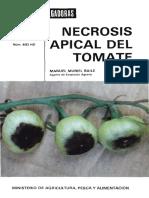 Necrosis Apical-hojas Divulgadoras