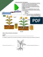 Circulacion de Las Plantas 6º