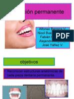 Seminario Morfologia Dental (Dientes Permanentes